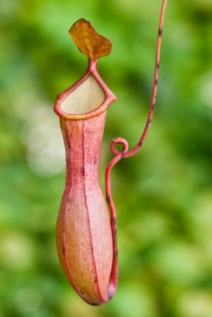 Endemic Plant